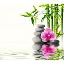 Sono, Stress e Ansiedade